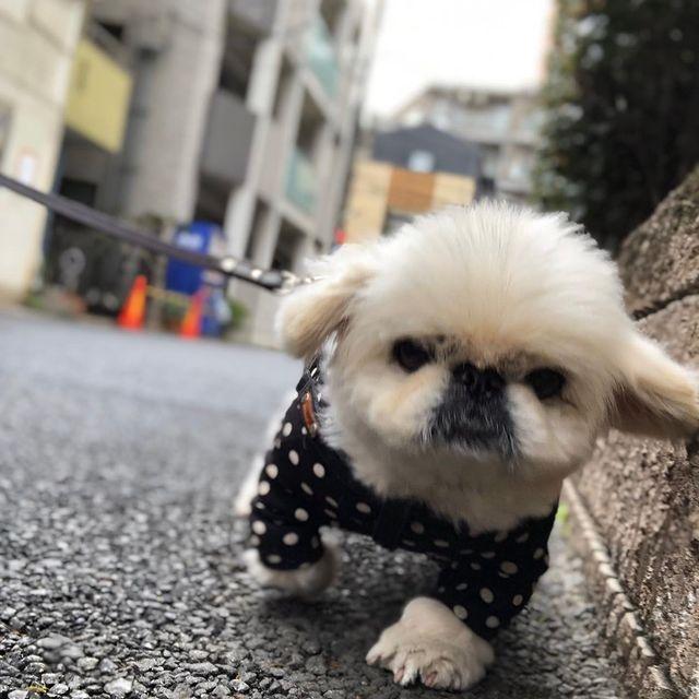 工藤静香ペット